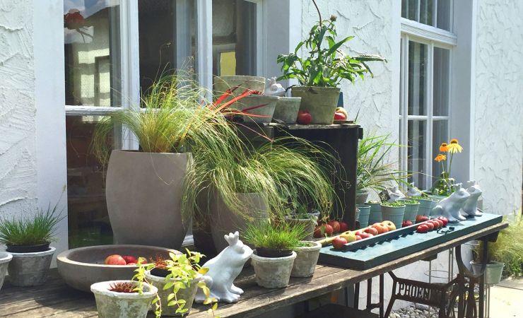 blumen schnittblumen zimmerpflanzen blumen f r garten und balkon hochzeits trauer und. Black Bedroom Furniture Sets. Home Design Ideas